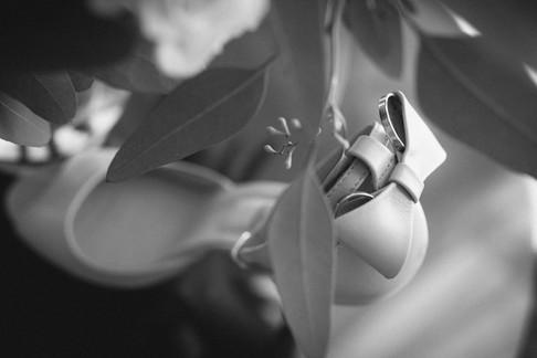 Flori si Cosmin-214.jpg