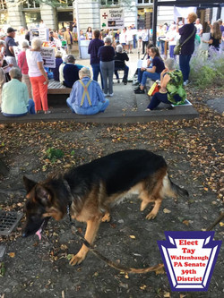 Dog in front of crowd of people