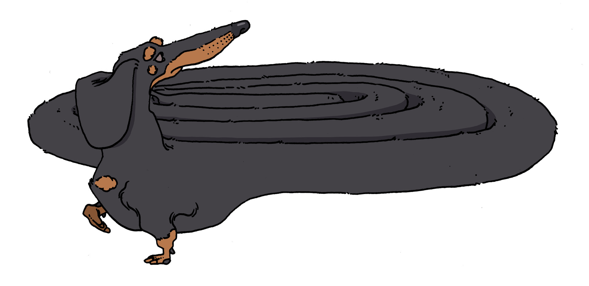 Very Long Dachshund