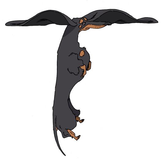 Flying Dachshund