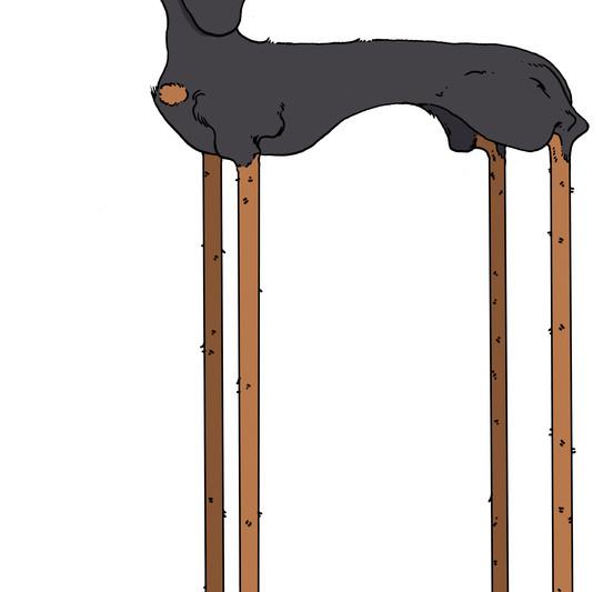 Long Legged Dachshund
