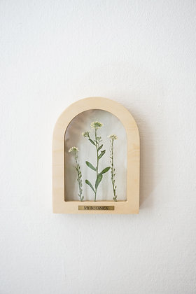 Santa Barbara Trifolium S