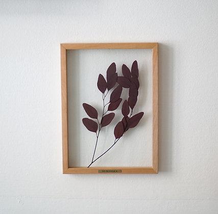 Eucalyptus Populus Red M