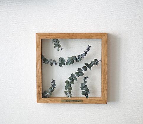 Patterns Eucalyptus S
