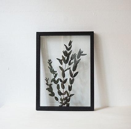 Parvifolia Green M