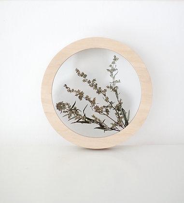 Artemisia Circle D25