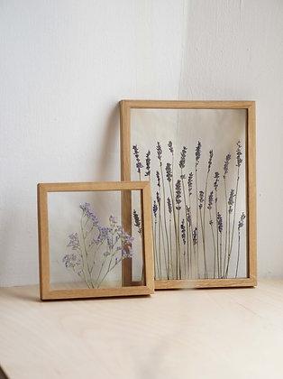 Сэт Casia/ Paniculatum