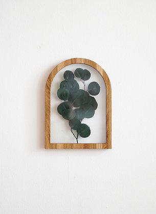 Eucalyptus Populus Green L