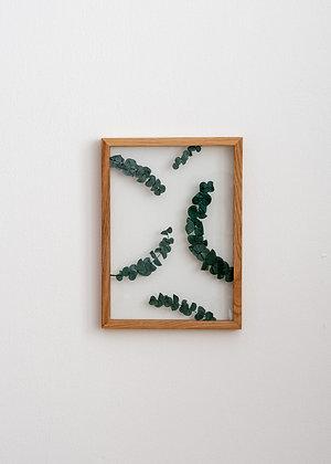 Patterns Eucalyptus M