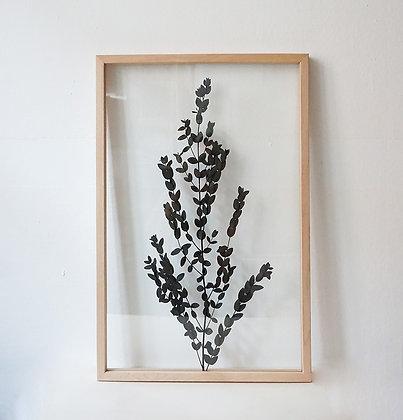 Parvifolia Green L