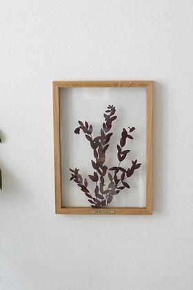 Parvifolia Red M