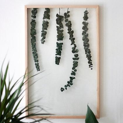 Eucalyptus Pluviam L