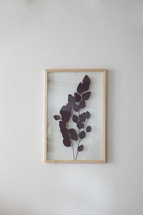 Eucalyptus Populus Red L