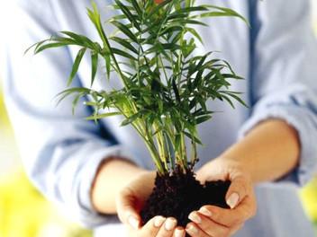Когда пересаживать свежекупленные  растения?
