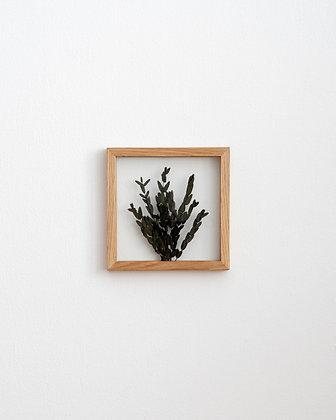 Parvifolia Green S