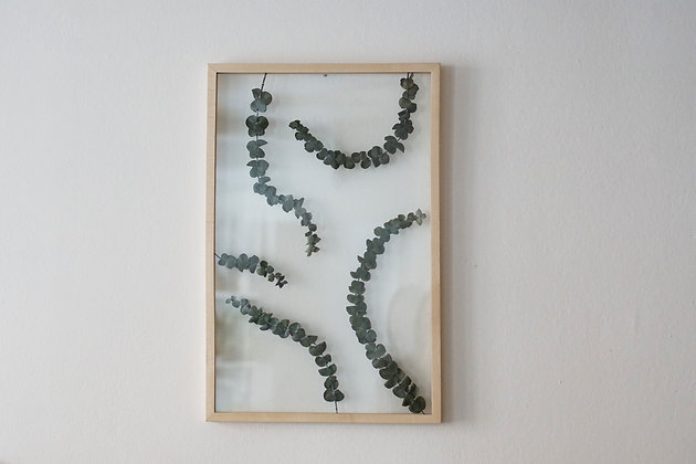 Patterns Eucalyptus L