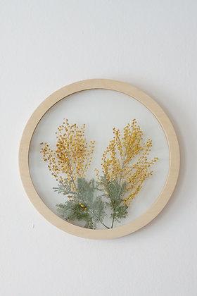 Сircle D40 Herbarium