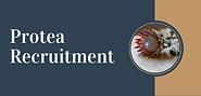 Protea Logo (1).png