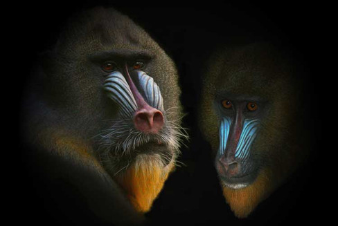 Mask of the Mandrill