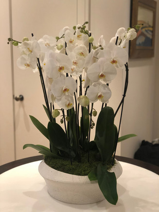 Entrance orchid display