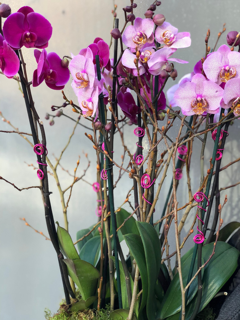 Mixed pink orchid display