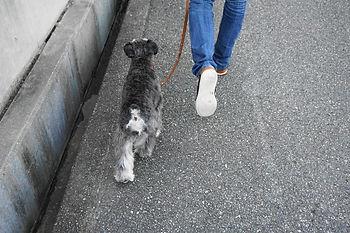 飼い主は犬の道しるべ画像