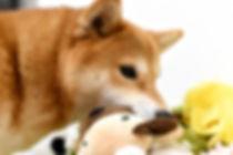 甘噛みは愛情表現のひとつ画像