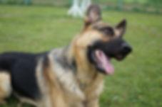 犬のしつけ、トレーニングってなに?画像