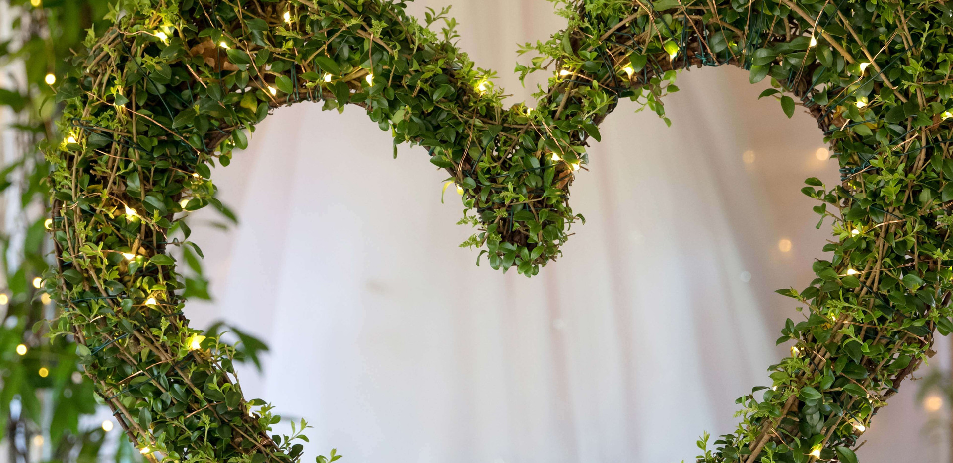 Whitestem - Living Tree Wedding Decor Dorset