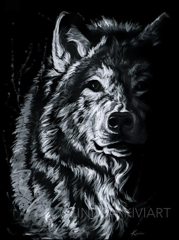 Shadow Wolf_Water-01.jpg