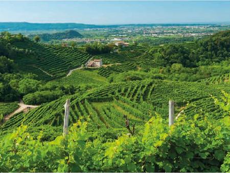 140 éve lobogó családi szenvedély az olasz borászatban, avagy a Serena borok története