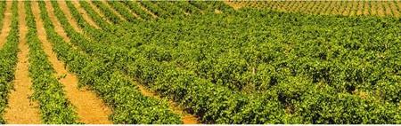 Hét nap borai avagy a palackba zárt Szicília