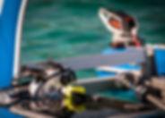 Platypus - Ocean Reef
