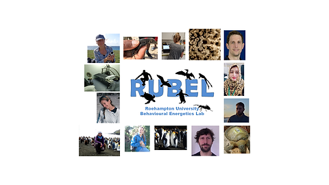 Rubel collage square.png