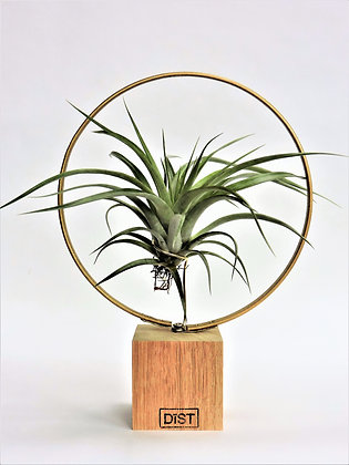 Dïst ring off airplant goud