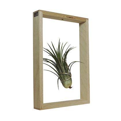 Dïst Window