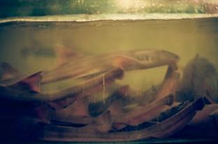 CRUEL SEAFOOD POETRY