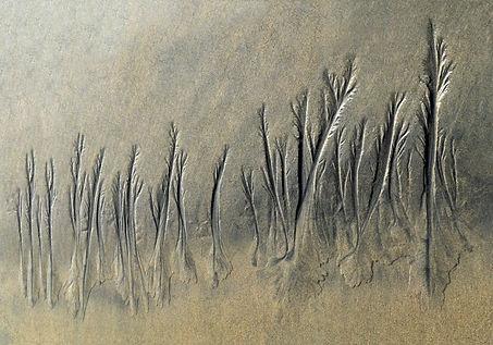Affiche- Plantes aquatiques.jpg