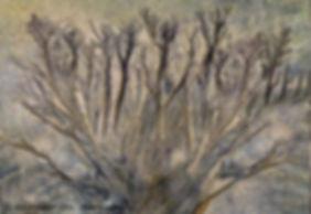 14-Plante aquatique - 33x46.jpg