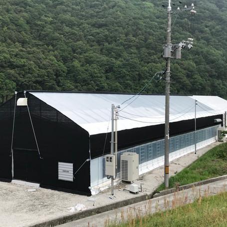 Shiitake Farm, Japan