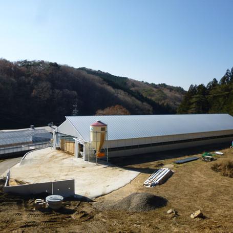 Livestock Farm, Japan