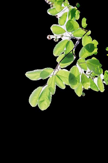 green%252520flowering%252520plant_edited