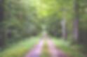 vernais - Forêt De Troncais - A Découvrir ...