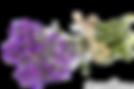 vernais bouquet violette de secrétariat de mairie