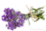 vernais bouquet de violette 3 - Les Infos Utiles