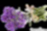 vernais bouquet de violette 9 - Notre Histoire ...