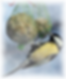 vernais photo oiseau - CCAS