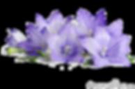 vernais composition florale mauve