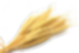 vernais épi de blé 8 - CCAS
