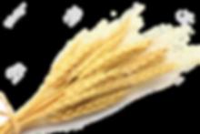 vernais - gros épi de blé2